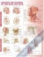 Anatomy and Injuries of the Head and Neck Anatomical Chart  Anatomical Chart Company 9780781786706